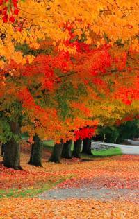 Fall foliage d'autunno